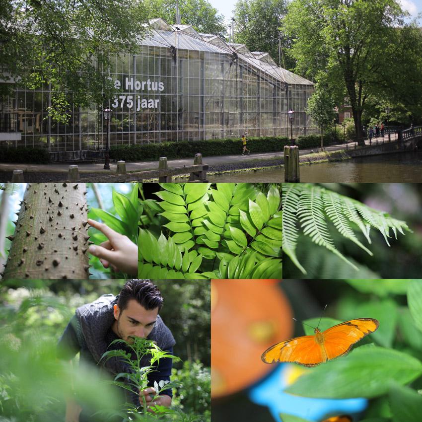 Les indispensables d 39 amsterdam ce qu 39 il faut absolument for Papillon jardin botanique 2015