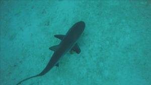 Bahamas animaux marins