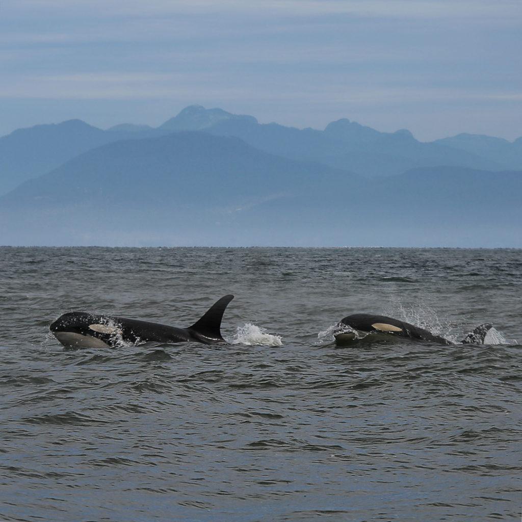 Vancouver orques